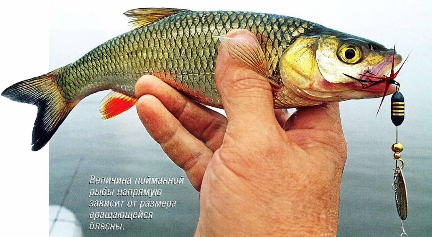 на что ловят рыбу приманка