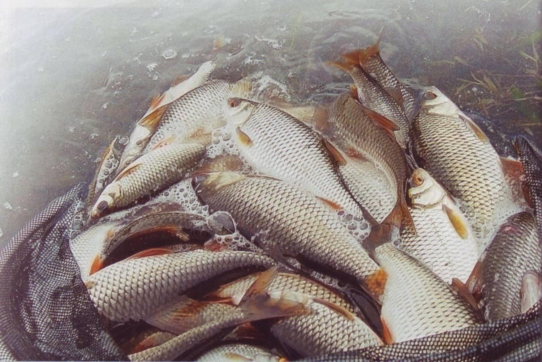матыли на рыбалку